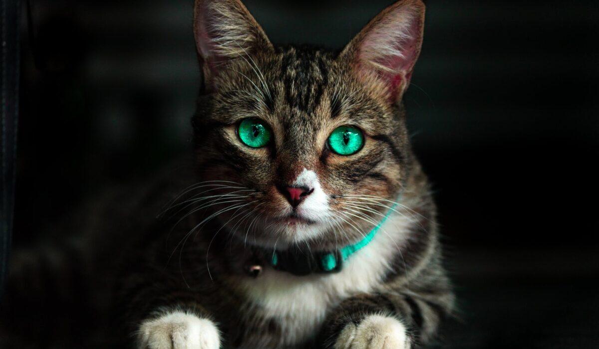perché sterilizzare il gatto