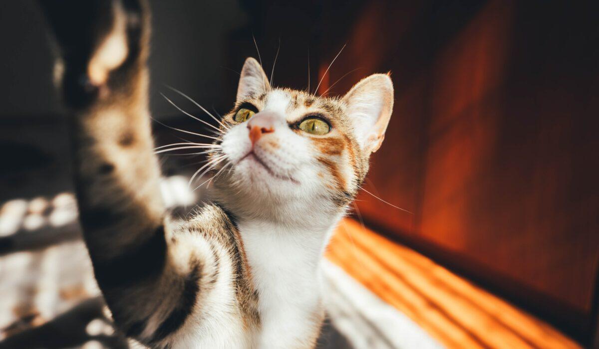capire i gatti