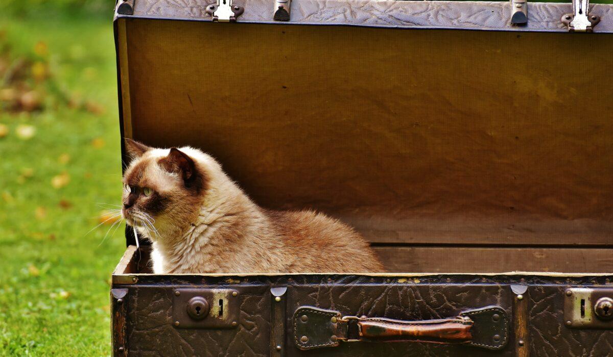 in viaggio con il gatto