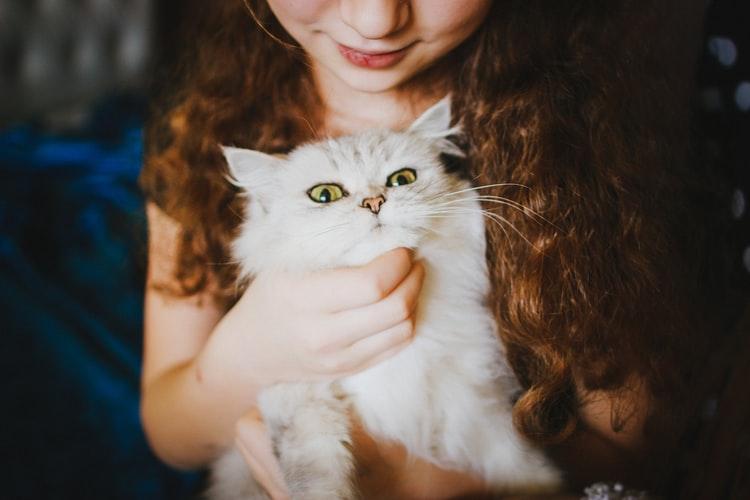 gatti virus Covid-19