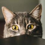 problemi di salute del gatto