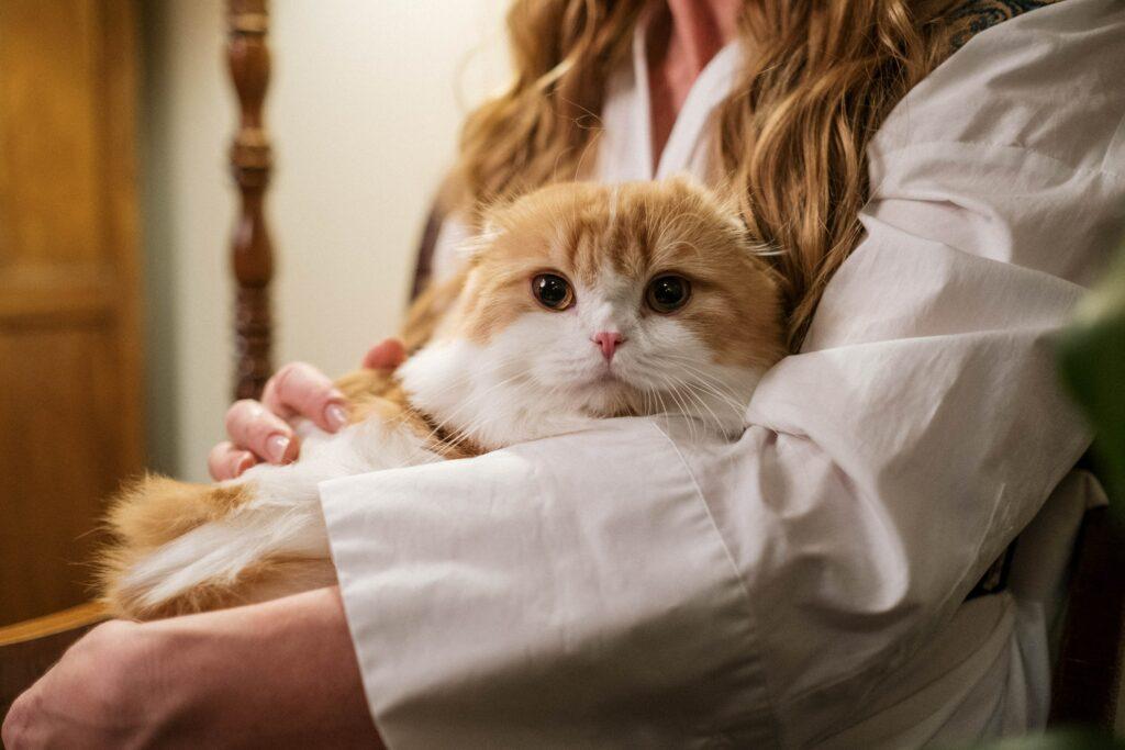 come capire se il gatto vuole bene