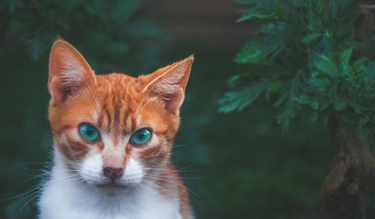 gatto aggressivo