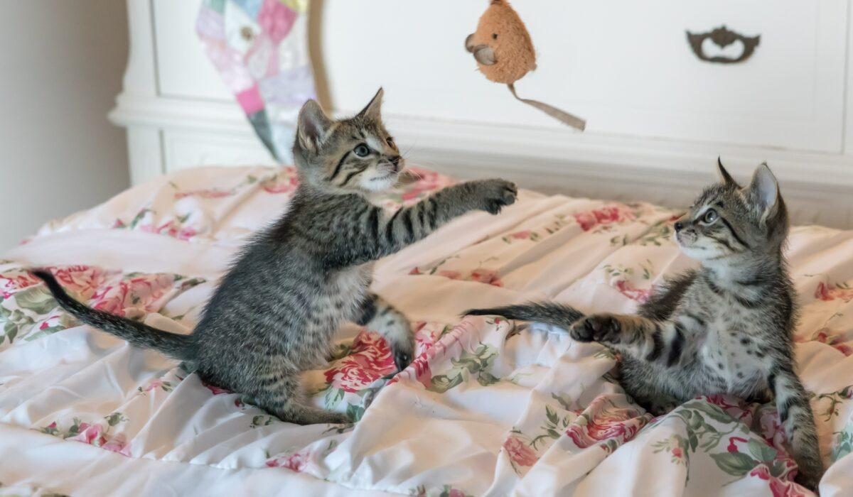 giochi per i gatti