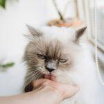 pet therapy gatti