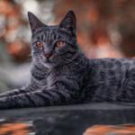 come vedono i gatti